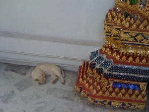 Felines of Bangkok